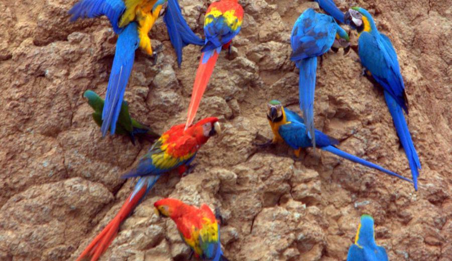 Perú_Puerto Maldonado